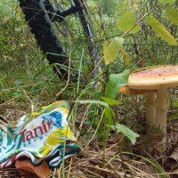 Kostanjev piknik v torek 10.10. ob 16h, Taborniški dom